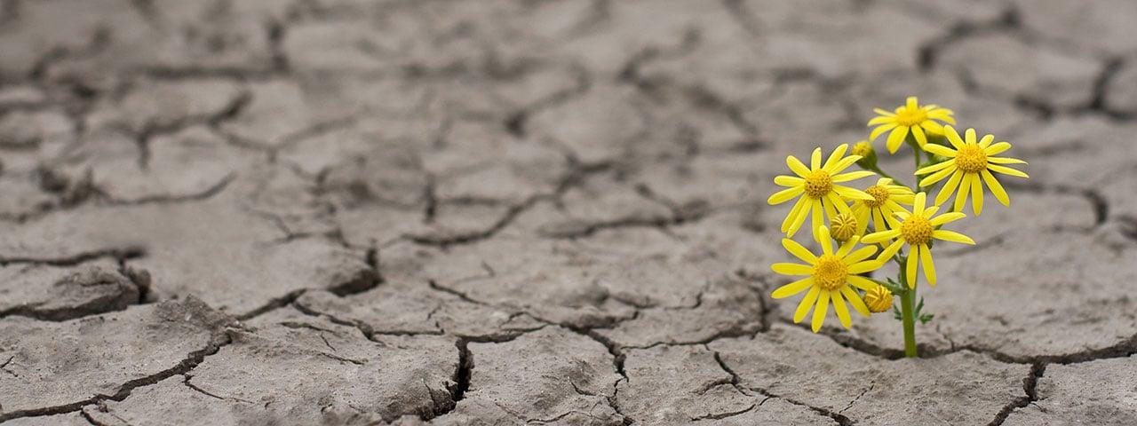 img-hero-RI-climate-change